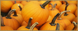 October Ingredient of the Month: Pumpkin